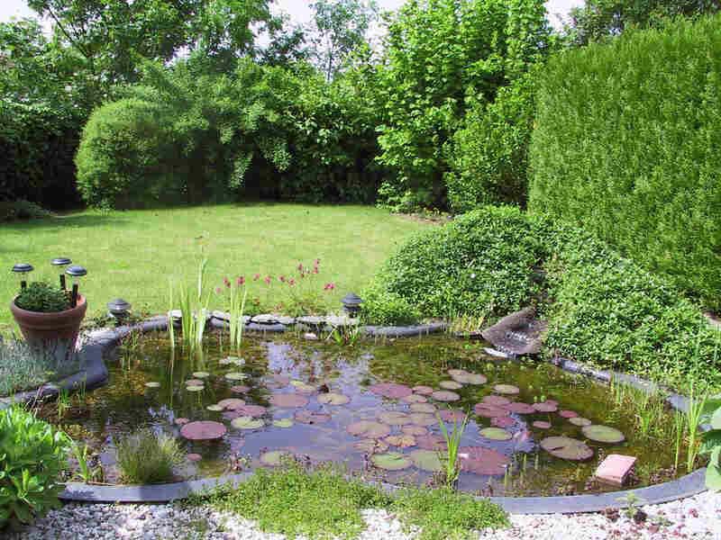 Soorten vijvers vijver for Vijver voor kleine tuin